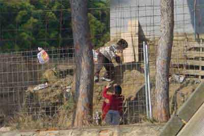 Tanca de separació entre el camp de futbol del FC Badalona i el parc de Can Solei