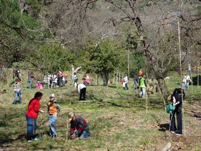 Gent plantant arbres